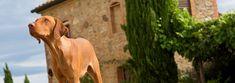 Hundefreundliche Feriendomizile in der Toskana und in Umbrien