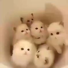 Don't Miss to FOLLOW Kittens Family   #Awesomecats #beautifulcats