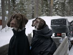 dogs in coats.