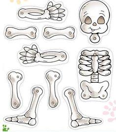 Como armar un esqueleto humano movible - Imagui