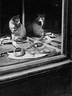 Gato se olhando no espelho (Brassaï, 1946). O gato, a casa de espelhos e as aventuras do olhar: http://www.incinerrante.com/textos/gato-se-olhando-no-espelho-1946-de-brassai