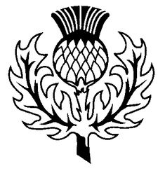 Scottish Thistle Tattoo Black And White Hand Embroidery Designs, Embroidery Patterns, Scottish Thistle Tattoo, Dog Quilts, Fancy Letters, Skeleton Art, Stained Glass Patterns, Celtic Designs, Tribal Art