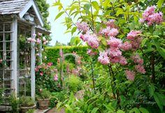 Bella's Rose Cottage