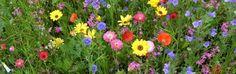 Bienenstube | Rund um die Familie und Freizeit