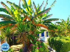 Bed-and-breakfast-in-Greece - Zorbas Island apartments in Kokkini Hani, Crete Greece 2020 Heraklion, Crete Greece, Bed And Breakfast, Island, Beach, Nature, Plants, Hani, November