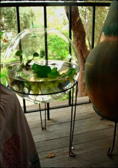 #water terrarium #ウォーターテラリウム(Via:  Water Terrarium)夏場は涼しげでよいかも!こういう、丸い器に水と植物が入ってるものが家にあると、なんかいいですね。(^^)底砂がご入用なら、K砂をお願いします(^^)。