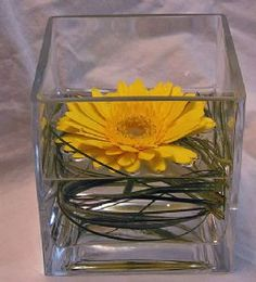 Single yellow gerbera in square vase with bear grass