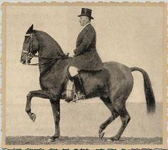 German rider Otto Lörke on his horse Kronos.