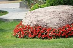 Large accent boulder with flowering plants at the base-we certainly have enough boulders in our yard...need to figure out how to make them look nicer.