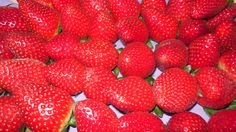 Strawberries ♥