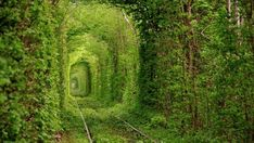 The Tunnel of Love has been cut in this north Ukraine town as a way to make abandoned train tracks more picturesque. (Photo by Oleg Gordienko)