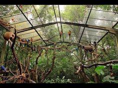 Bird Aviary, Bird Perch, Flight Cage, Zoo Architecture, Pet Bird Cage, Large Bird Cages, Pet Raccoon, Vivarium, Chickens Backyard