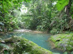 Belize jungle | clare dominguez | Just another WordPress.com site