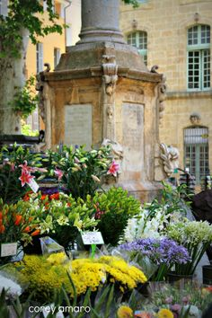 Aix en Provence flower market. Repinned by www.mygrowingtraditions.com