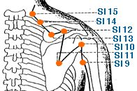 SI 11 Acupuncture Point - Tian Zong - Small Intestine Meridian | Yin Yang House http://infinityflexibility.com/wp/
