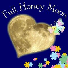 May's Honey Moon, a time for love. Full Moon Names, May Full Moon, Wicca, Pagan, Moon Images, Howl At The Moon, Gems Jewelry, Honey, Image Search