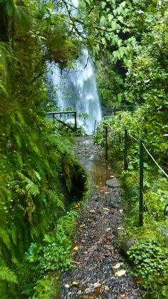 Beautiful Photos Of Nature, Beautiful Places To Travel, Nature Photos, Amazing Nature, Beautiful Landscapes, Beautiful Gardens, Aesthetic Photography Nature, Nature Aesthetic, Forest Photography