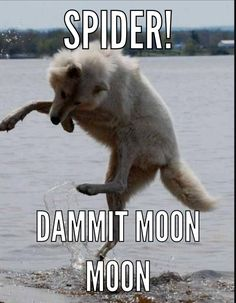 I love moon moon things