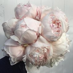 A pale pink peony bouquet. A pale pink peony bouquet. Faux Flowers, Pink Flowers, Beautiful Flowers, Fresh Flowers, Exotic Flowers, Yellow Roses, Pink Roses, Blush Peonies, Peonies Bouquet