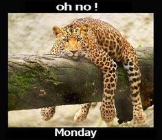 It is Monday again !!