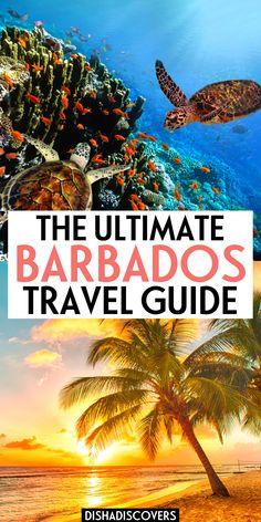 Vacation to Barbados: Ultimate Guide + 12 Fun Things to Do | barbados | barbados vacation | barbados beaches | barbados travel guide | barbados travel tips | barbados travel photos | bridgetown barbados travel guide | things to do in Barbados | things to do in Barbados top 10 | things to do in Barbados bucket lists | barbados vacation things to do | bridgetown barbados things to do | barbados things to do | best things to do in Barbados | barbados cruise port things to do | #barbados