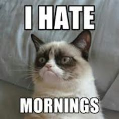 Angry cat hates mornings