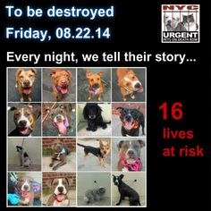 TO BE DESTROYED: 16 Dogs to be euthanized by NYC ACC- FRI 8/22/14 This is a HIGH KILL shelter group. You may be the only hope for these pups! **** PLEASE SHARE EVERYWHERE! To rescue a Death Row Dog, Please read this: http://www.urgentpetsondeathrow.org/must-read/