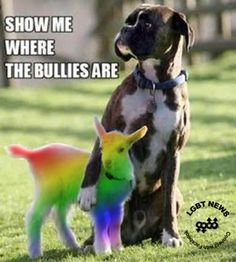 Thank you to all the dogs in my life for protecting my little rainbow heart.