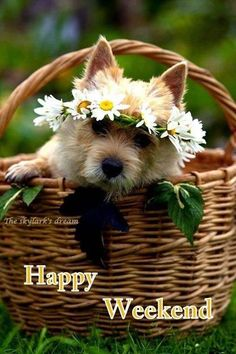 Happy Weekend Dog dog weekend weekend quotes happy weekend its the weekend Bon Weekend, Hello Weekend, Happy Weekend Quotes, Happy Quotes, Weekend Greetings, Birthday Greetings, Good Morning Good Night, Morning Greeting, Dogs And Puppies