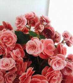 Give me flowers before I die  #flowers #roses #vsco #vscocam #white #love #flores #selfie #rosa #amor #efeito