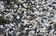 Gaspesie Winter Beach Blueberry, Fruit, Food, Berry, Essen, Meals, Yemek, Blueberries, Eten