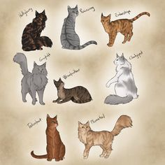 After I wrote another round of BramblexSquirrel drabbles (yeeaah I'm still stuck on a name for that drabble series. New Kitty Fanbabies Warrior Cat Oc, Warrior Cats Fan Art, Warrior Cat Drawings, Animal Sketches, Animal Drawings, Cute Drawings, Teacup Cats, Illustration Art, Illustrations