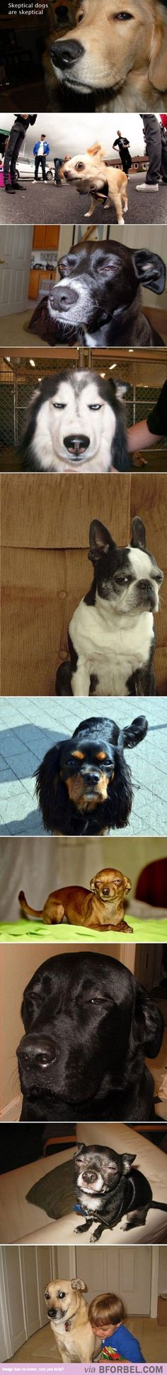 10 Skeptical Dogs…