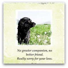 examples of what to write in a sympathy card for the death of a pet
