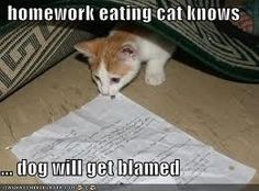 Homework eating cat knows dog will get blamed
