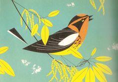 Sophie Wilson//Design Context: Image//Type as Image//Birds//Charley Harper.