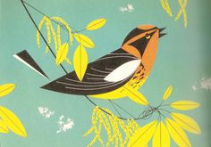 Sophie Wilson//Design Context: Image//Type as Image//Birds//Charley Harper.