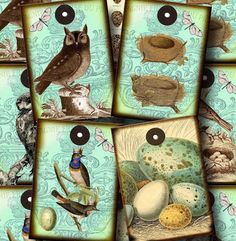 ShaBBy ChiC OWLs BiRDs NeSTs eGGs vintage paper by thephotocube, $2.50