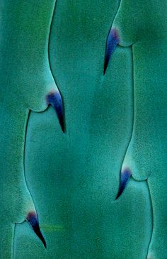 Agave: by Don Taylor