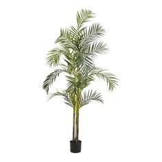 Areca Palm Silk Tree - 7 Feet Tall >>> Details can be found by clicking on the image.