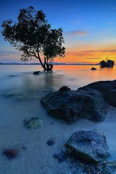 Tree Alone in Sunset - by Dwi Yulianto