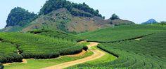 Tea plantations in Moc Chau. #vietnam #sonla #mocchau #tea #plantation #travel #wandering