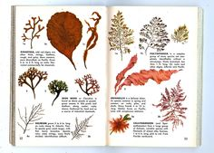 All sizes | Sea Weeds From Seashore Golden Guide To Nature | Flickr - Photo Sharing!