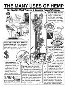 industrial hemp uses - So many uses! Marijuana Facts, Medical Marijuana, Ganja, Cannabis Plant, Cannabis Oil, Growing Weed, Endocannabinoid System, Hemp Seeds, Day Book