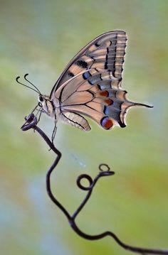 40Butterflies And Moths