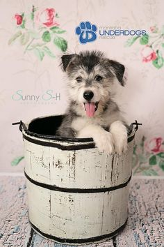 Pet Photography by Sunny S-H Photography using Cream Flower Rose Wallpaper backdrop from Backdrops Canada