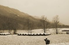 This photograph was taken at the beginning of that long, deep, relentless storm of 2009 in Southwest Virginia in Poor Valley near Saltville and Hayters Gap. One of the artist's personal favorites. Photographer, L. Costello Hinchey.
