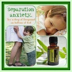 Separation Anxiety - Bergamot
