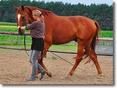 Longieren Archive - Wege zum Pferd