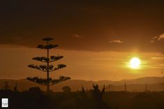 Look up the sky and feel the wonder! 日常小美麗 . More on: https://www.circlewalker.me/akl-main .  #NZ #NewZealand #紐西蘭 #新西蘭 #旅遊 #Travel #背包客 #BackPacker #周圍行CircleWalker #攝影 #photography #art #藝術 #travelPhoto #photo #Nikon #奧克蘭 #Auckland #capital #首都 #天 #sky #雲 #cloud #日落 #夕陽 #twilight #sunset #彩色 #color
